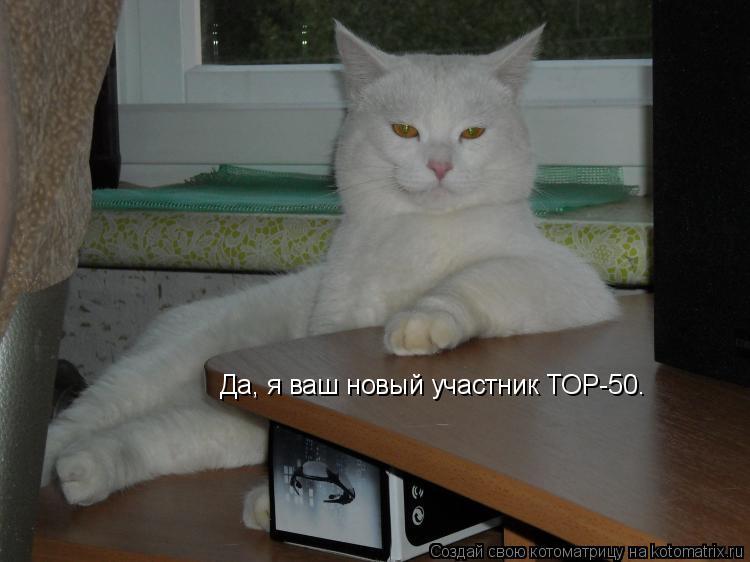 Котоматрица: Да, я ваш новый участник ТОР-50.