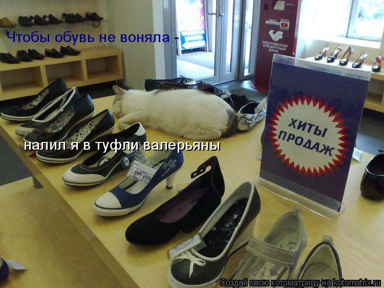 Котоматрица: Чтобы обувь не воняла -  налил я в туфли валерьяны