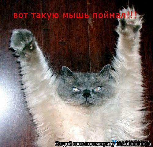 Котоматрица: вот такую мышь поймал!!!