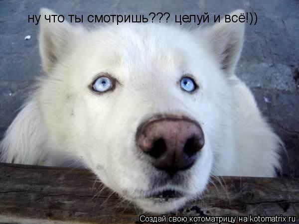 Котоматрица: ну что ты смотришь??? целуй и всё!))