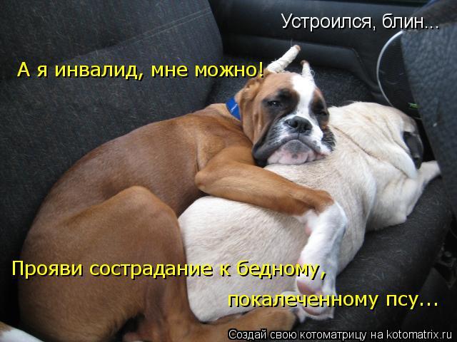 Котоматрица: Устроился, блин... А я инвалид, мне можно! Прояви сострадание к бедному,  покалеченному псу...