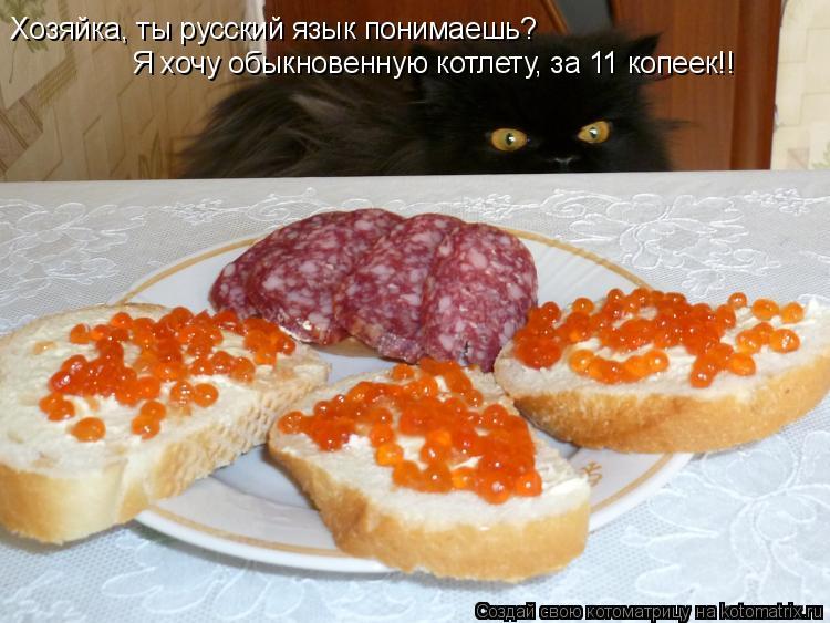 Котоматрица: Хозяйка, ты русский язык понимаешь? Я хочу обыкновенную котлету, за 11 копеек!!
