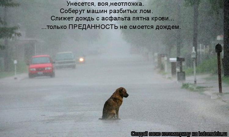 Котоматрица: Унесется, воя,неотложка. Соберут машин разбитых лом. Слижет дождь с асфальта пятна крови... ...только ПРЕДАННОСТЬ не смоется дождем.