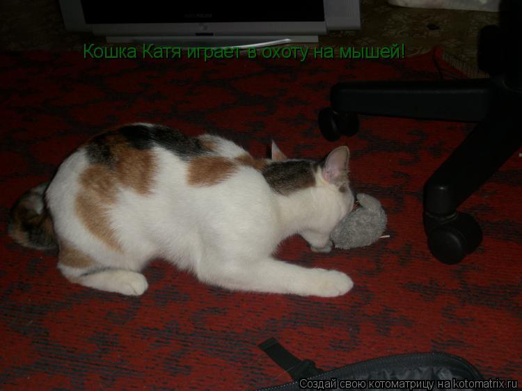 Котоматрица: Кошка Катя играет в охоту на мышей!