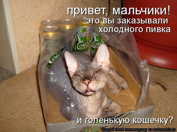 Котоматрица: привет, мальчики! это вы заказывали холодного пивка и голенькую кошечку?