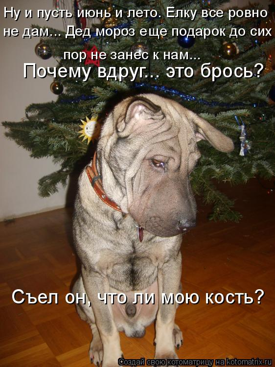 Котоматрица: Ну и пусть июнь и лето. Елку все ровно   не дам... Дед мороз еще подарок до сих  пор не занес к нам...  Съел он, что ли мою кость?  Почему вдруг... эт