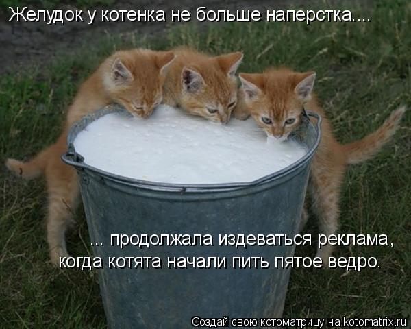 Котоматрица: Желудок у котенка не больше наперстка.... продолжала издеваться реклама , когда котята начали пить пятое ведро. ...