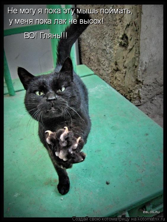 Котоматрица: Не могу я пока эту мышь поймать, у меня пока лак не высох!  ВО! Глянь!!!