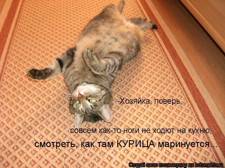Котоматрица: -Хозяйка, поверь,  совсем как-то ноги не ходют на кухню,  смотреть, как там КУРИЦА маринуется...