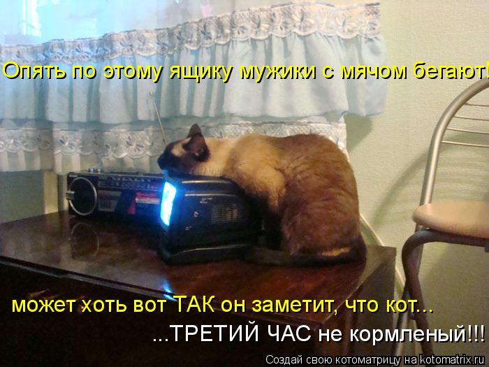 Котоматрица: Опять по этому ящику мужики с мячом бегают! может хоть вот ТАК он заметит, что кот... ...ТРЕТИЙ ЧАС не кормленый!!!