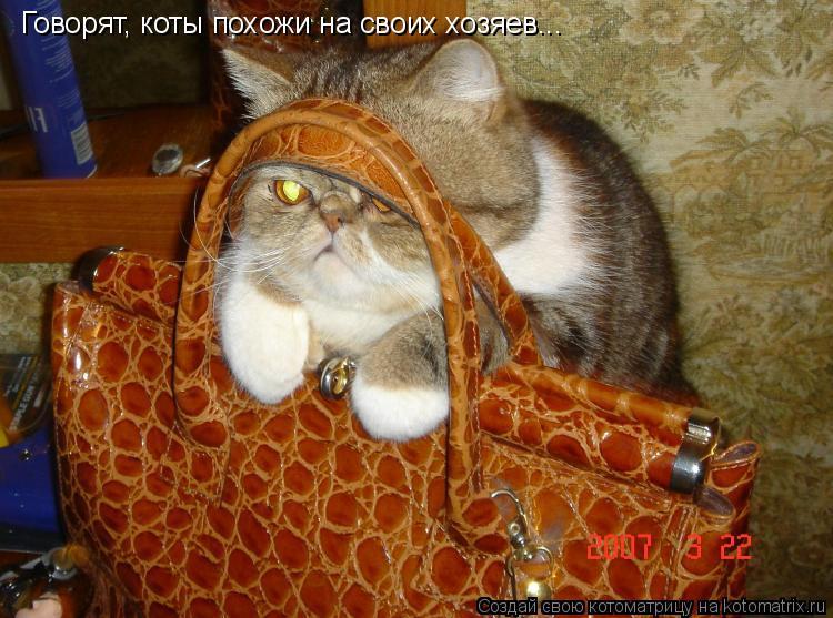 Котоматрица: Говорят, коты похожи на своих хозяев...