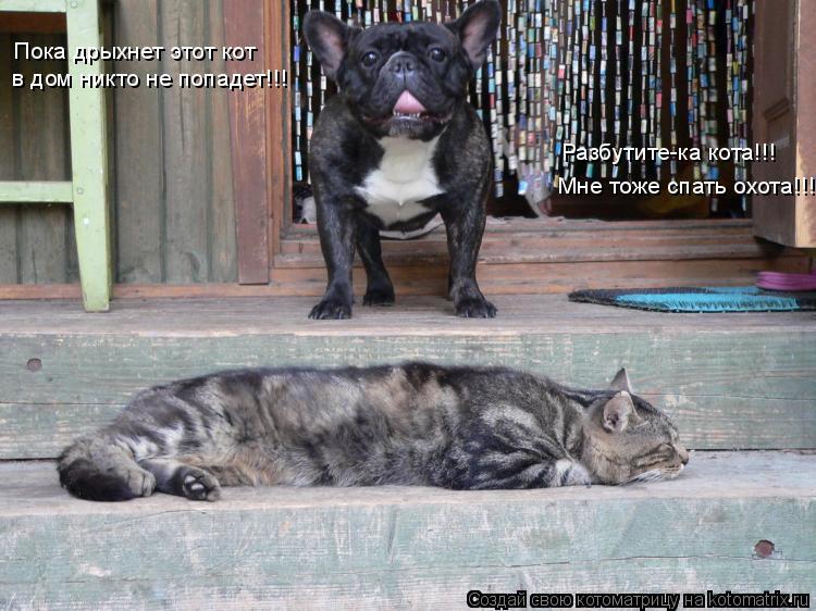 Котоматрица: Пока дрыхнет этот кот в дом никто не попадет!!! Разбутите-ка кота!!! Мне тоже спать охота!!!