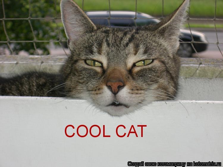 Котоматрица: COOL CAT