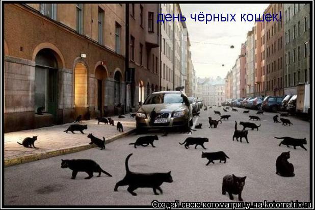 Котоматрица: день чёрных кошек!