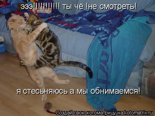 Котоматрица: эээ!!!!!!!!!!! ты чё !не смотреть! я стесьняюсь а мы обнимаемся!