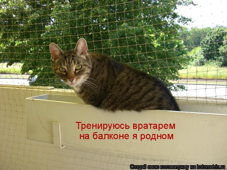 Котоматрица: Тренируюсь вратарем  на балконе я родном