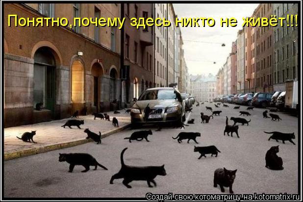 Котоматрица: Понятно,почему здесь никто не живёт!!!