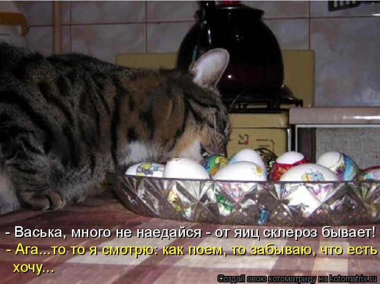 Котоматрица: - Ага...то то я смотрю: как поем, то забываю, что есть хочу... - Васька, много не наедайся - от яиц склероз бывает!