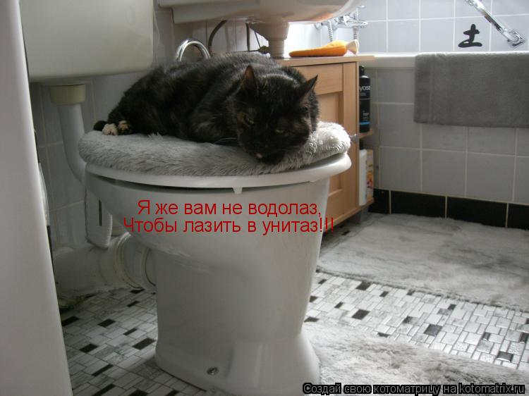 Котоматрица: Я же вам не водолаз, Чтобы лазить в унитаз!!!