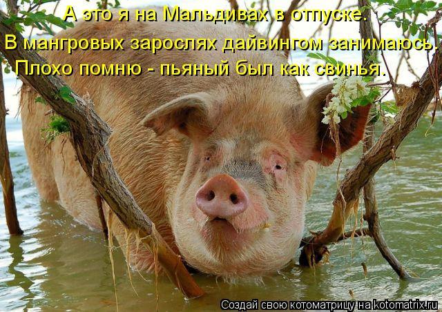 Котоматрица: А это я на Мальдивах в отпуске.  В мангровых зарослях дайвингом занимаюсь. Плохо помню - пьяный был как свинья.