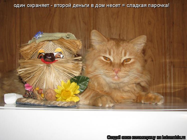 Котоматрица: один охраняет - второй деньги в дом несет = сладкая парочка!