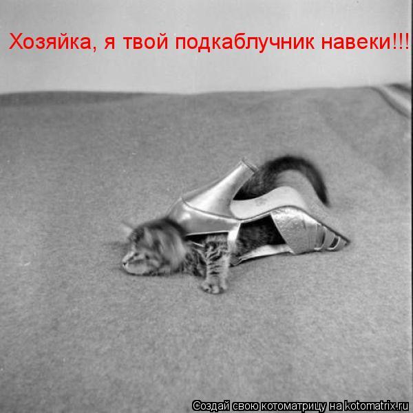 Котоматрица: Хозяйка, я твой подкаблучник навеки!!!