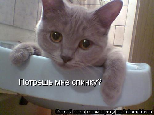 Котоматрица: Потрешь мне спинку?