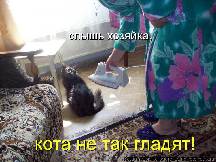 Котоматрица: слышь хозяйка, кота не так гладят!