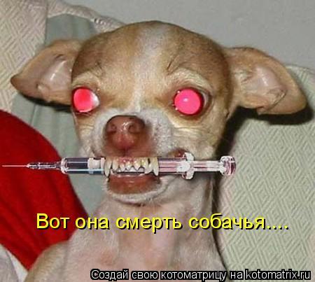 Котоматрица: Вот она смерть собачья....
