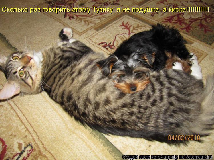 Котоматрица: Сколько раз говорить этому Тузику: я не подушка, а киска!!!!!!!!!!!