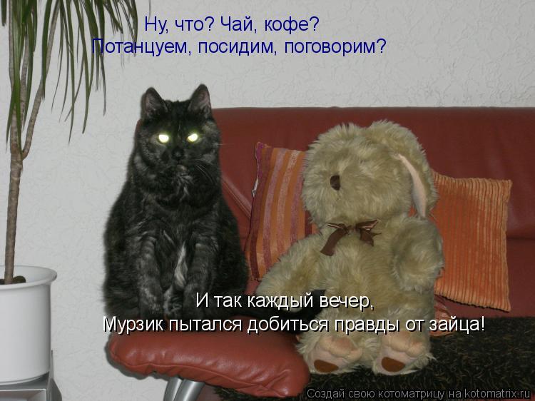 Котоматрица: Ну, что? Чай, кофе? Потанцуем, посидим, поговорим? И так каждый вечер,   Мурзик пытался добиться правды от зайца!