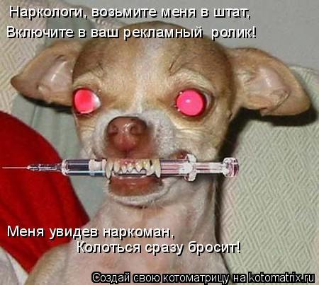 Котоматрица: Наркологи, возьмите меня в штат,                                           Включите в ваш рекламный  ролик!