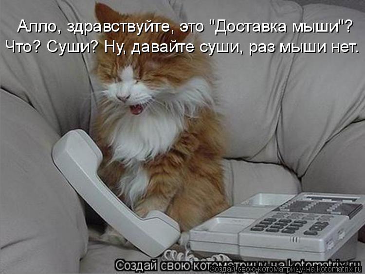 """Котоматрица: Алло, здравствуйте, это """"Доставка мыши""""? Что? Суши? Ну, давайте суши, раз мыши нет."""