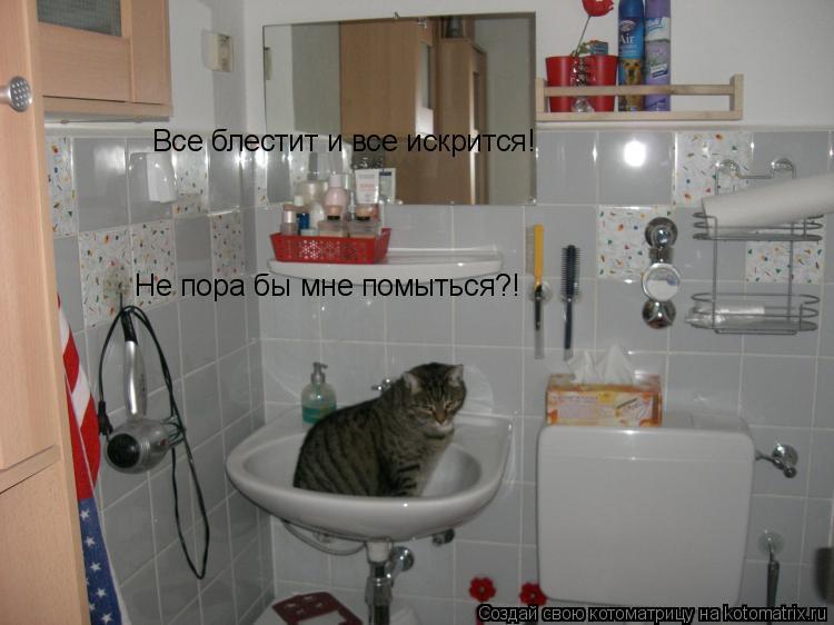 Котоматрица: Все блестит и все искрится! Не пора бы мне помыться?!