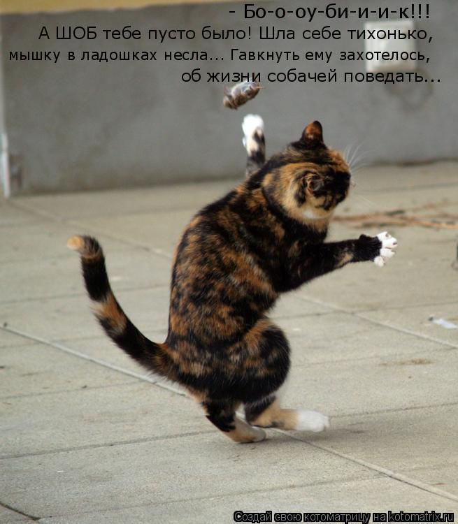 Котоматрица: мышку в ладошках несла... Гавкнуть ему захотелось,  А ШОБ тебе пусто было! Шла себе тихонько, - Бо-о-оу-би-и-и-к!!! об жизни собачей поведать...