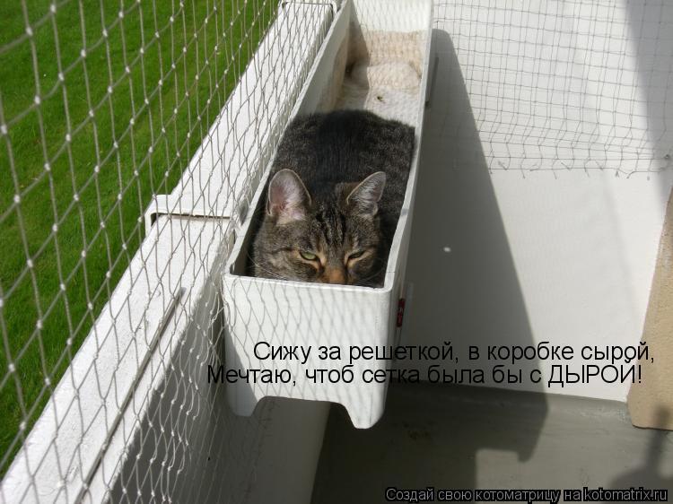 Котоматрица: Сижу за решеткой, в коробке сырой,  Мечтаю, чтоб сетка была бы с ДЫРОЙ!