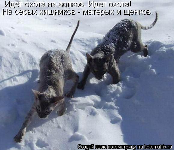 Котоматрица: Идет охота на волков. Идет охота! Hа серых хищников - матерых и щенков.