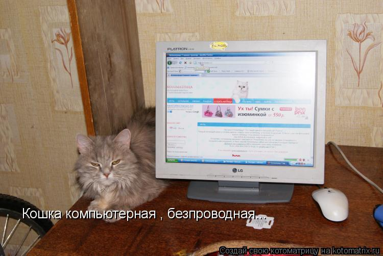 Котоматрица: Кошка компьютерная , безпроводная...