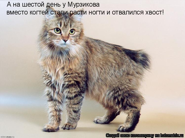 Котоматрица: А на шестой день у Мурзикова  вместо когтей стали расти ногти и отвалился хвост!