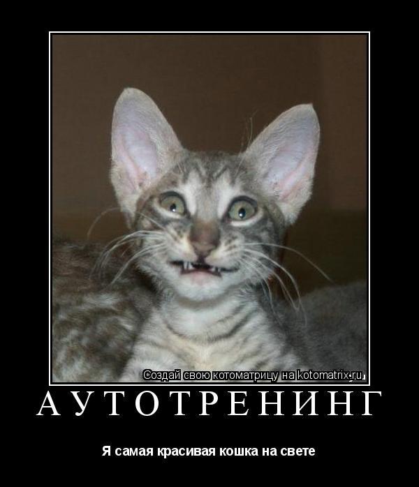 Котоматрица: аутотренинг Я самая красивая кошка на свете
