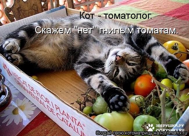 http://kotomatrix.ru/images/lolz/2010/06/30/616641.jpg