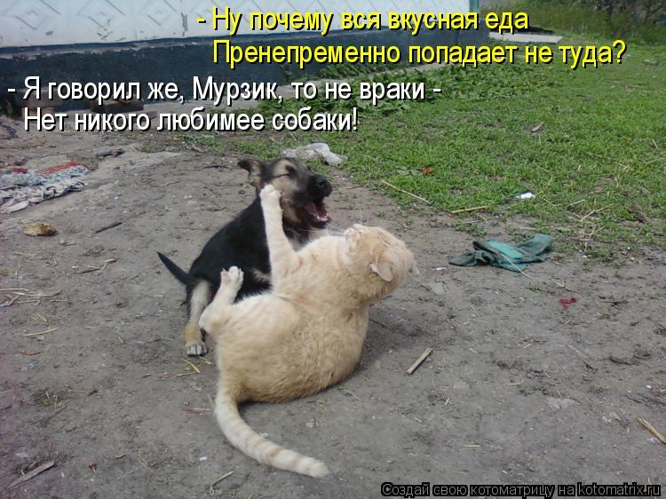 Котоматрица: - Ну почему вся вкусная еда Пренепременно попадает не туда? - Я говорил же, Мурзик, то не враки - Нет никого любимее собаки!