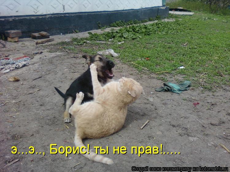 Котоматрица: э...э.., Борис! ты не прав!.....