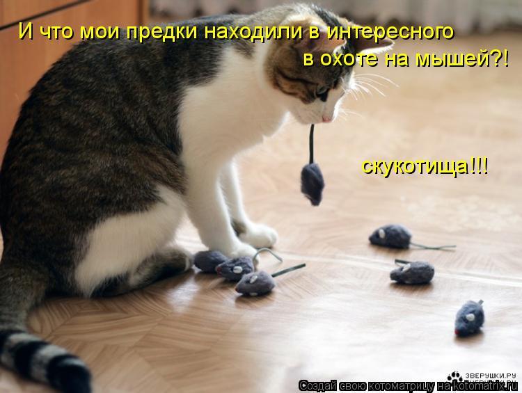 Котоматрица: И что мои предки находили в интересного в охоте на мышей?! скукотища!!!