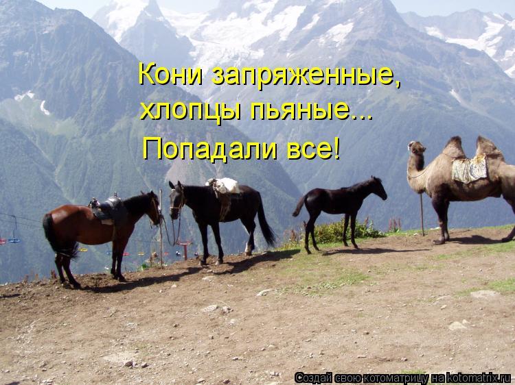 Котоматрица: Кони запряженные, хлопцы пьяные... Попадали все!