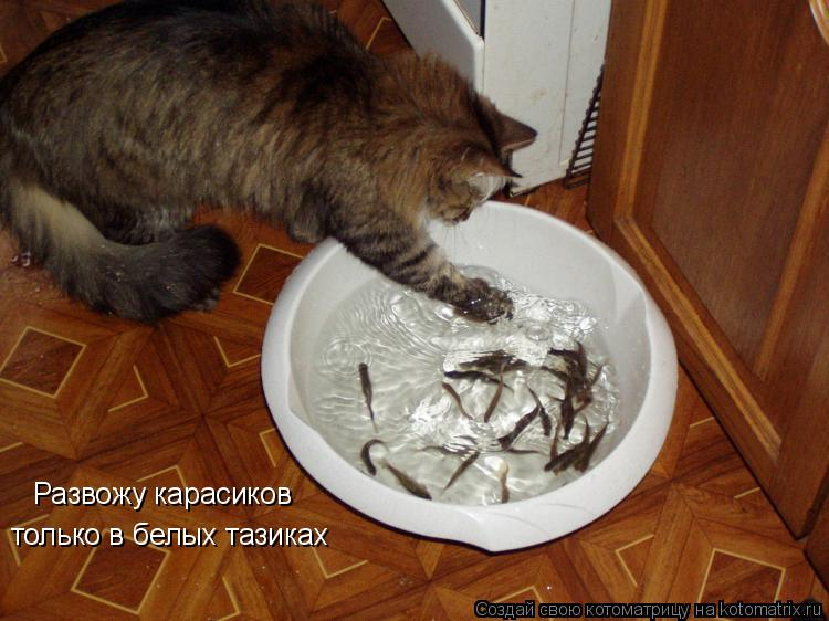 Котоматрица: Развожу карасиков только в белых тазиках