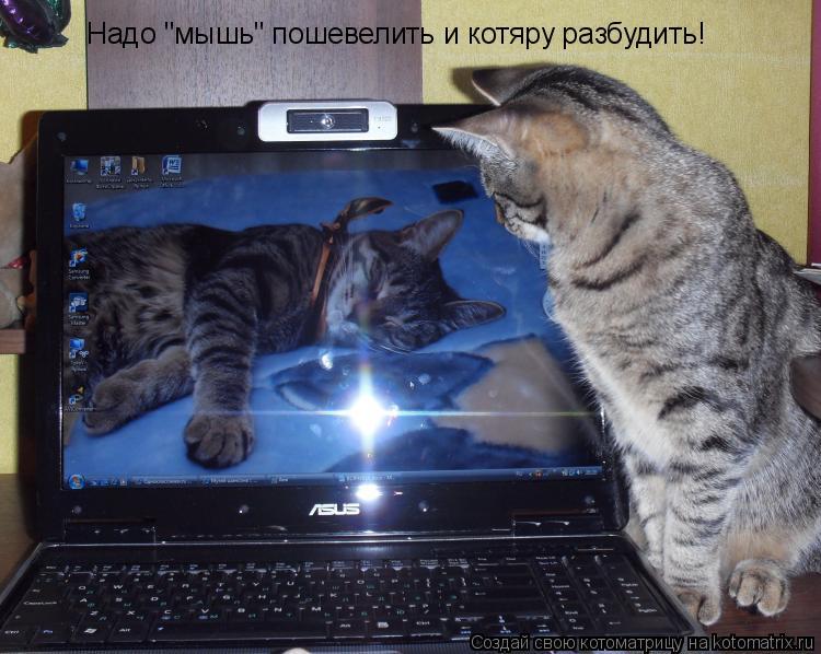 """Котоматрица: Надо """"мышь"""" пошевелить и котяру разбудить!"""