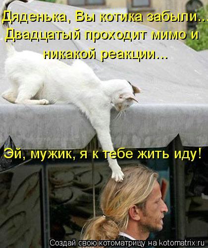 Котоматрица: Дяденька, Вы котика забыли...  Двадцатый проходит мимо и  никакой реакции... Эй, мужик, я к тебе жить иду!