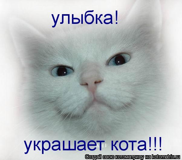улыбка! украшает кота!!!