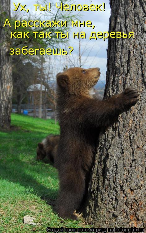 Котоматрица: Ух, ты! Человек!  А расскажи мне, как так ты на деревья  забегаешь?
